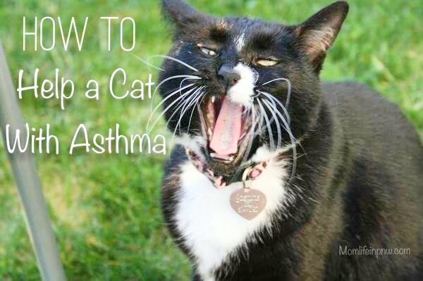 Cat asthma