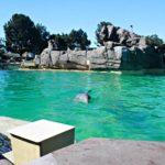 5 Tips When Visiting SeaWorld in San Diego, California